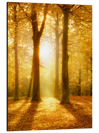 Aluminium print  Golden autumn forest in sunlight - Jan Christopher Becke