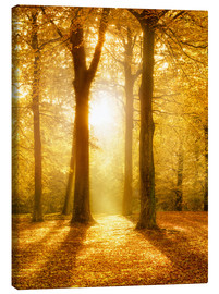 Canvas  Golden autumn forest in sunlight - Jan Christopher Becke
