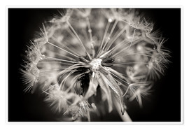 Premium poster Dandelion modern black and white