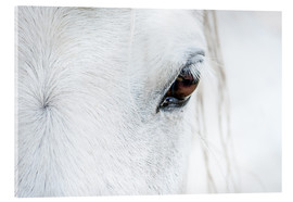 Acrylic print  Eye of the horse - Andreas Kossmann