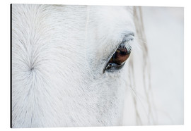 Aluminium print  Eye of the horse - Andreas Kossmann
