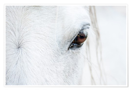 Premium poster  Eye of the horse - Andreas Kossmann