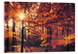 Acrylic print  forest autumn - pixelliebe