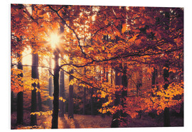 Foam board print  forest autumn - pixelliebe