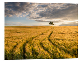 Acrylic print  Lonely Tree in Field - Andreas Wonisch