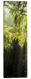 Canvas print  Sunbeams in a forest - Markus Lange