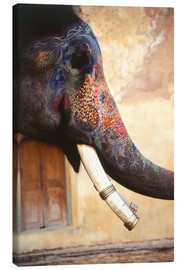 Canvas print  Painted Indian elephant - Dave Bartruff
