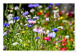 Premium poster colorful flower meadow