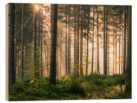 Wood print  Sunlight in fall forest - Andreas Wonisch