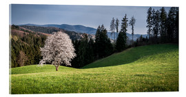 Acrylic print  Blooming Apple Tree in Black Forest - Andreas Wonisch