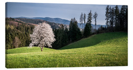 Canvas print  Blooming Apple Tree in Black Forest - Andreas Wonisch