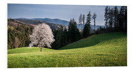 Forex  Blooming Apple Tree in Black Forest - Andreas Wonisch