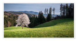 Premium poster Blooming Apple Tree in Black Forest