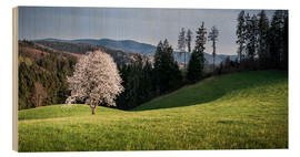 Wood print  Blooming Apple Tree in Black Forest - Andreas Wonisch