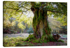 Canvas print  Old tree - Bieberchen