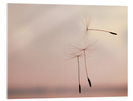 Acrylic print  The lightness of being - Nestwick