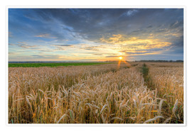 Premium poster  Summer sunset in a cornfield - Michael Valjak