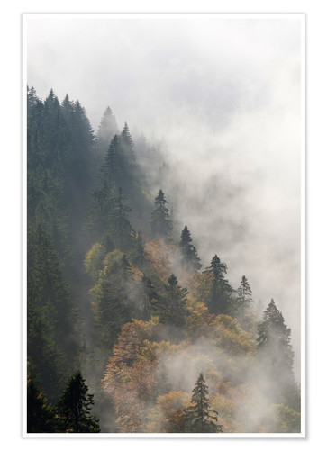 Premium poster Cloud forest