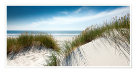 Premium poster Dune with fine shining marram grass