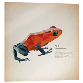 Acrylic print  fig5 polygon frog square - Labelizer