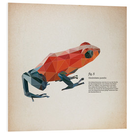 Foam board print  fig5 polygon frog square - Labelizer