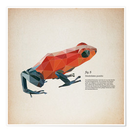 Premium poster fig5 polygon frog square