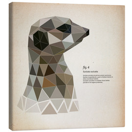 Canvas print  fig4 Polygon meerkat  square - Labelizer