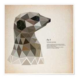 Poster fig4 Polygon meerkat  square