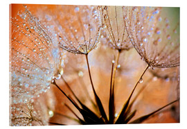 Acrylic glass  Dandelion Orange Light - Julia Delgado