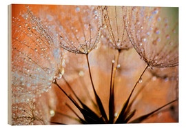 Wood print  Dandelion orange light - Julia Delgado