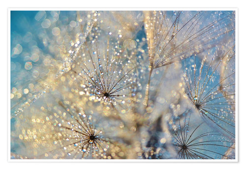 Premium poster Dandelion Golden Dream