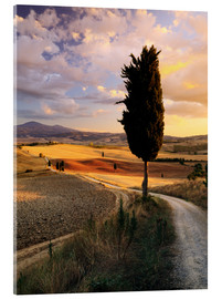 Acrylic print  Evening in the Val d'Orcia, Tuscany - Matteo Colombo