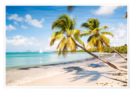 Premium poster Les Salines beach, Martinique