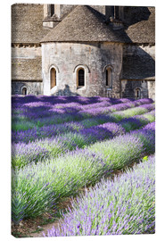 Matteo Colombo - Senanque abbey and lavender, Provence