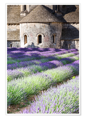 Poster Senanque abbey and lavender, Provence