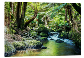 Acrylic print  Rainforest in Tasmania - Matteo Colombo