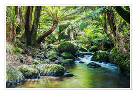 Premium poster  Rainforest in Tasmania - Matteo Colombo