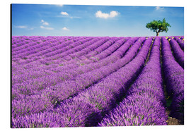 Alu-Dibond  Lavender field and tree - Matteo Colombo