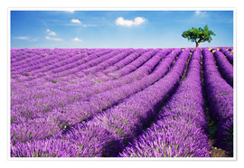 Poster  Lavender field and tree - Matteo Colombo