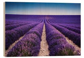 Wood  Lavender field in Provence - Matteo Colombo