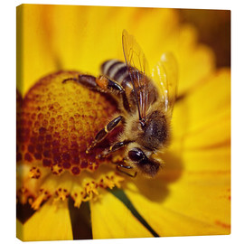 Canvas  Flowers carousel for bees - Dirk Driesen