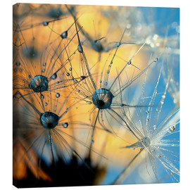 Canvas  Dandelion with dew - Dirk Driesen