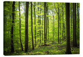 Canvas print  Fresh Green - Beech forest in Harz - Oliver Henze