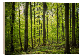 Wood  Fresh Green - Beech forest in Harz - Oliver Henze