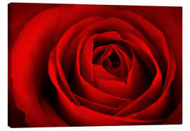 Canvas print  red rose - pixelliebe