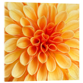 Acrylic glass  Yellow Dahlia - Martina Cross