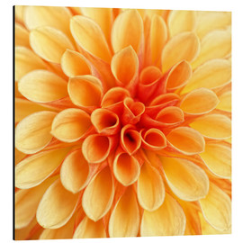 Alu-Dibond  Yellow Dahlia - Martina Cross