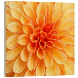 Wood print  Yellow Dahlia - Martina Cross