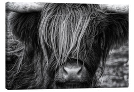 Canvas  Scottish Highland Cattle - Martina Cross