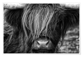 Poster  Scottish Highland Cattle - Highlander - Martina Cross